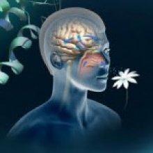 l-olfactotherapie-comment-ca-fonctionne